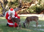 Santa with deer at Homosassa Springs State Park, Florida