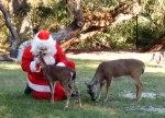 Santa with deer at Homosassa Springs State Park, Florida