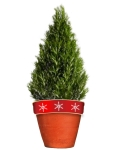 rosemary Christmas tree in painted pot