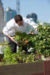 vegetables growing in roof garden