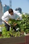 vegetables growing in roof garden
